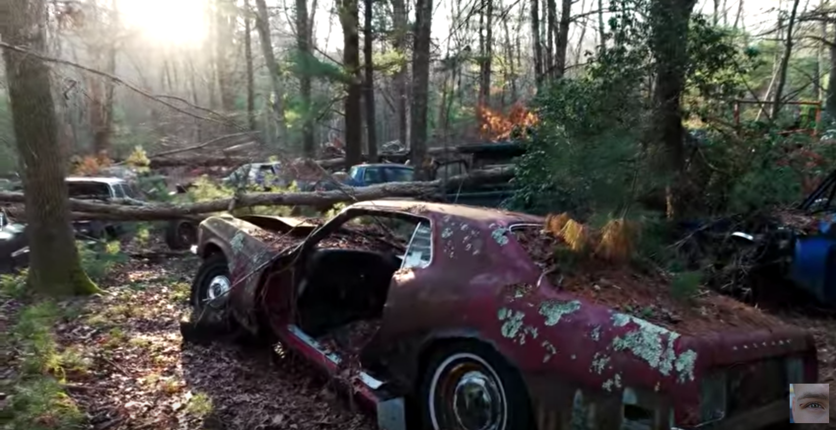 Unique Abandoned Car Forest Where Vehicles Go To Die