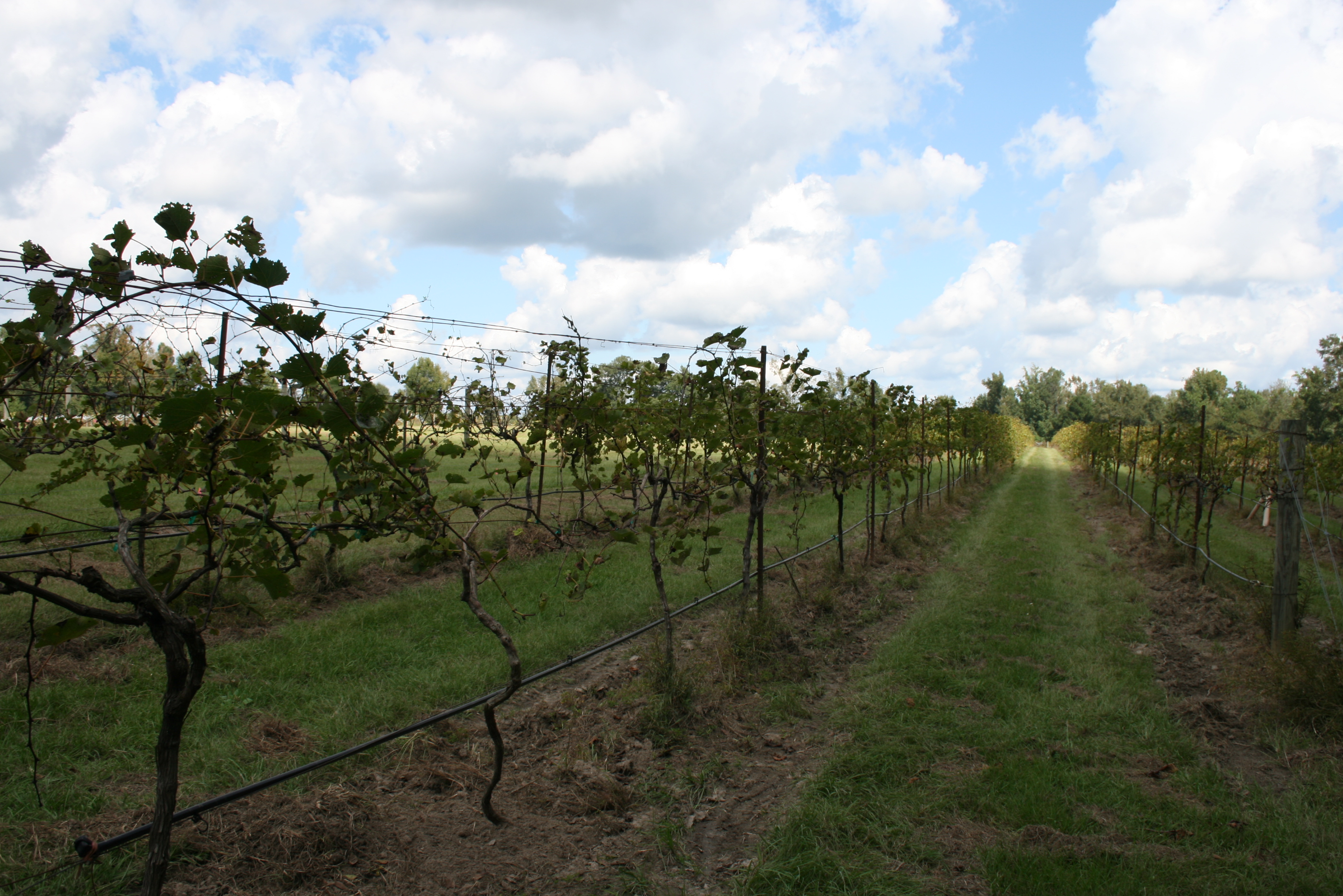 Rockside Winery Is Best Winery Near Columbus For A Day Trip