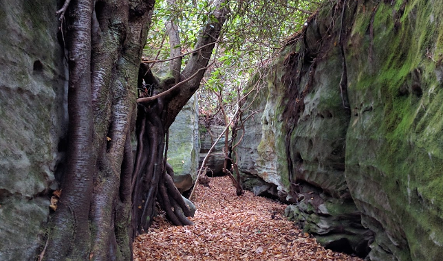 Maryland's Rock Maze Is A Hiking Adventure Like No Other