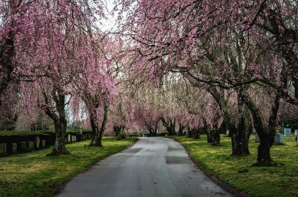 Lexington National Cemetery Is An Enchanting Place During Spring In Kentucky