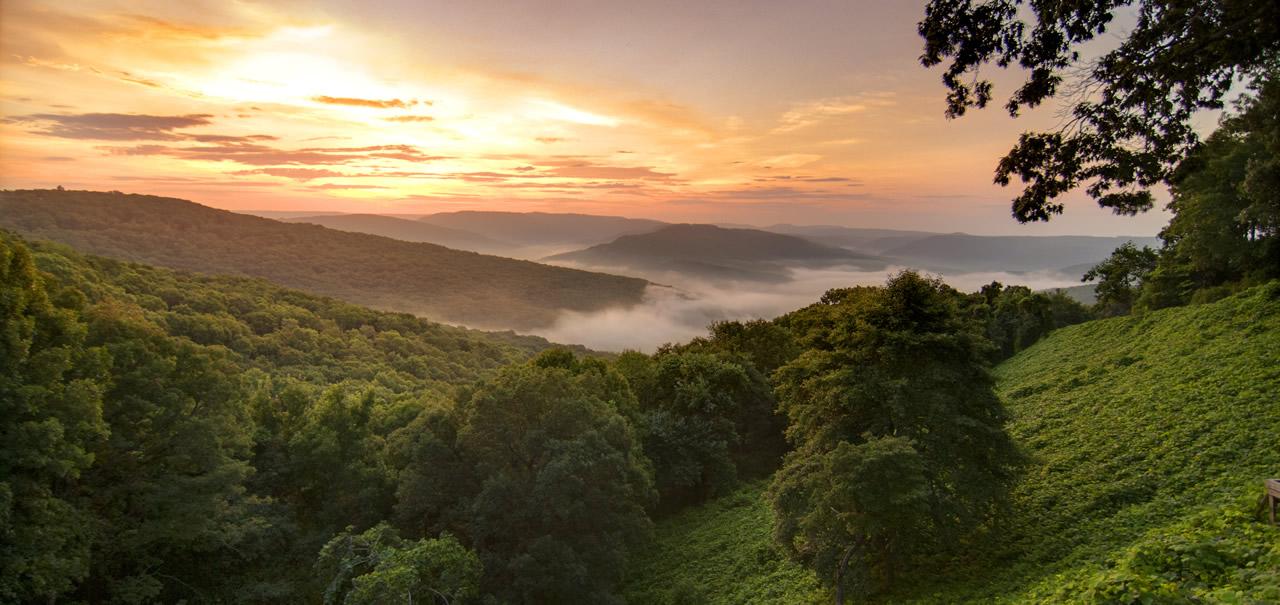 Arkansasbanner image