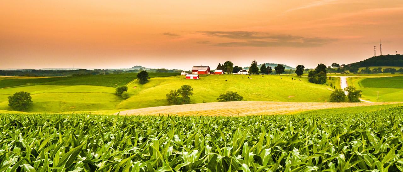 Illinoisbanner image
