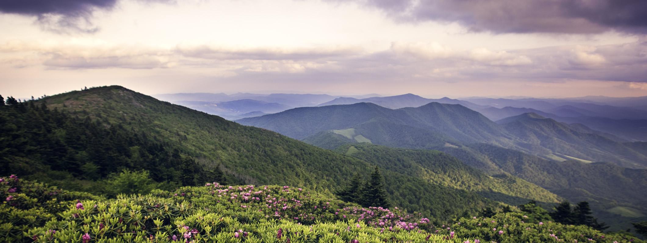 Tennesseebanner image