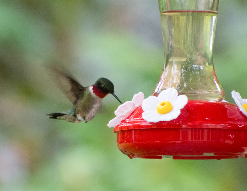 Keep Your Eyes Peeled, Thousands Of Hummingbirds Are Headed Right For West Virginia During Their Migration This Spring