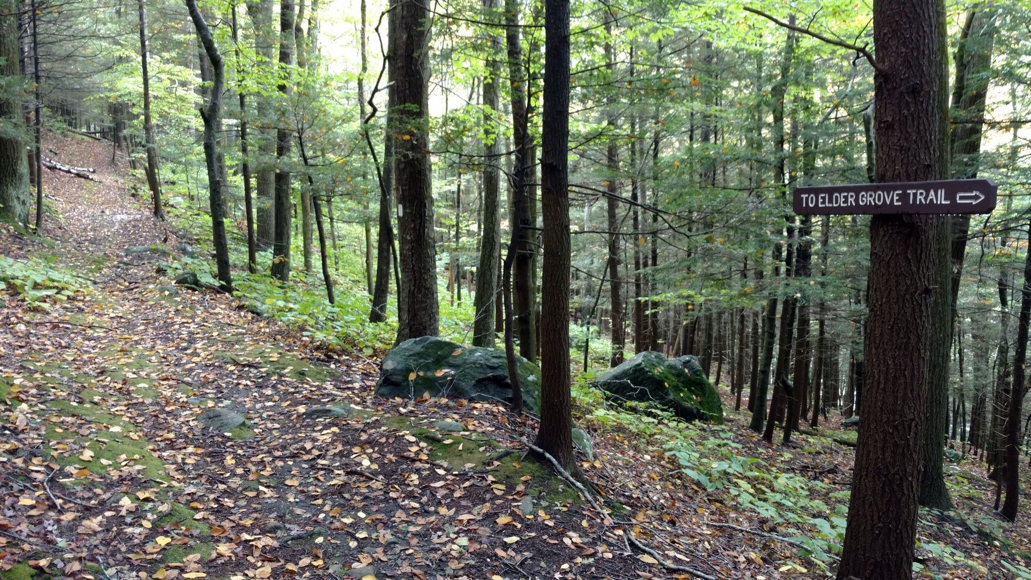 Mohawk Trail State Forest Has The Oldest Tree In Massachusetts