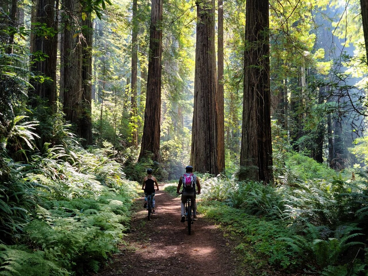 Take A Bike Tour Through The Redwood Forest For The Ultimate Northern California Adventure