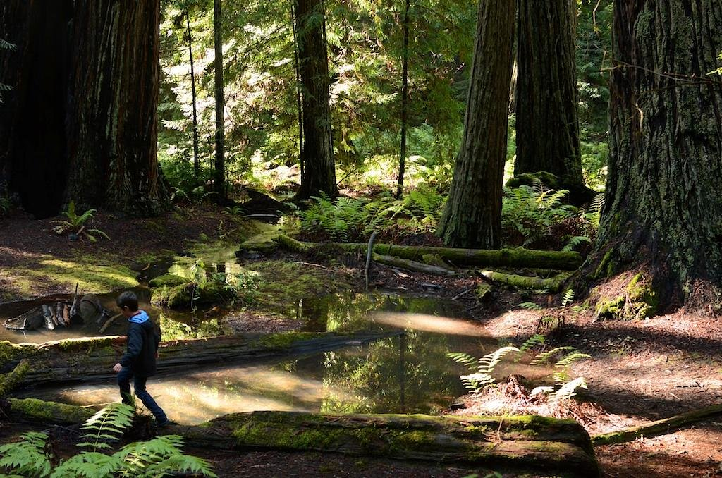 Lose Yourself For Hours In Montgomery Woods, A Remote Redwoods Park In Northern California