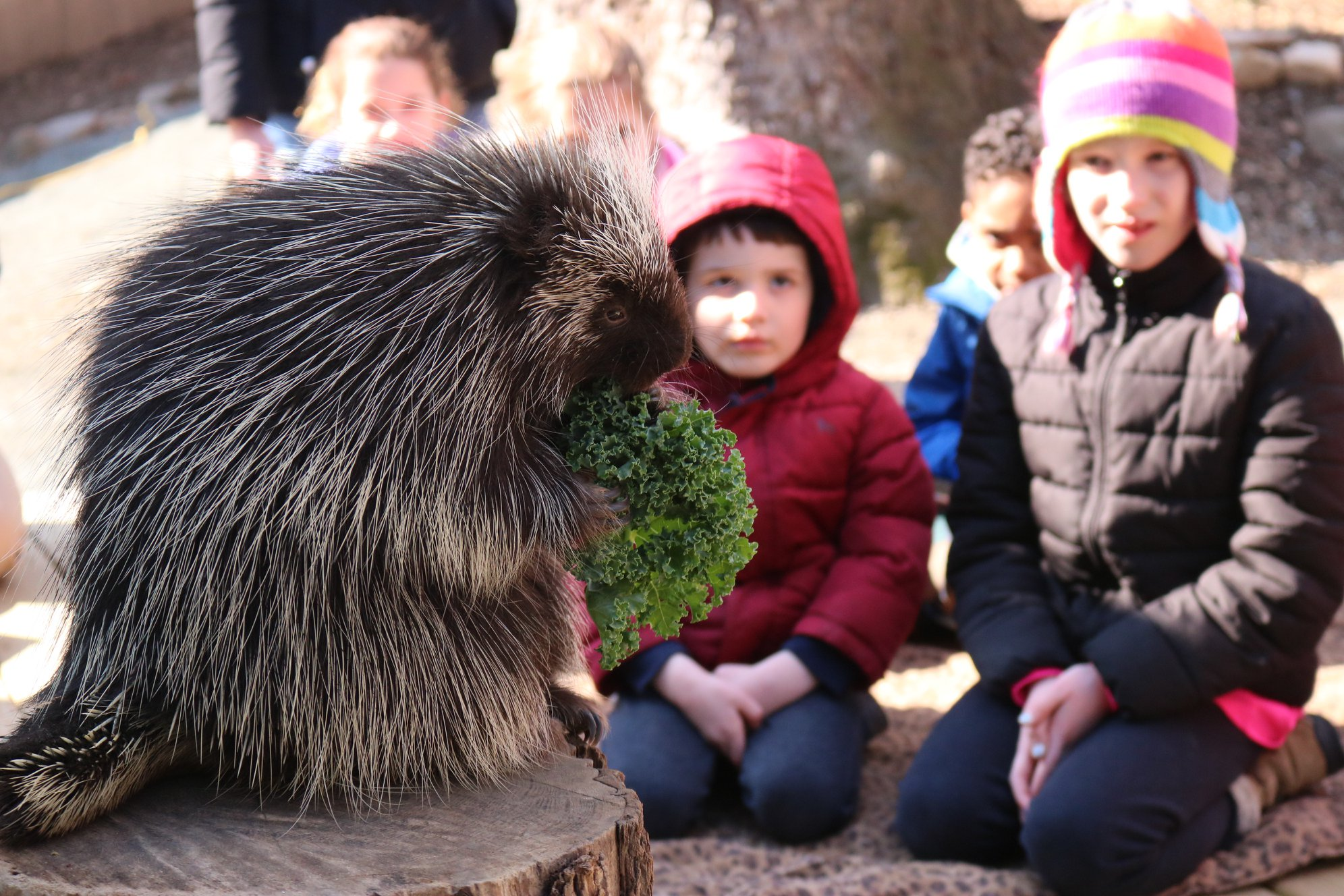 Brandywine Zoo Is Offering Free Admission NOW  Until March 2021