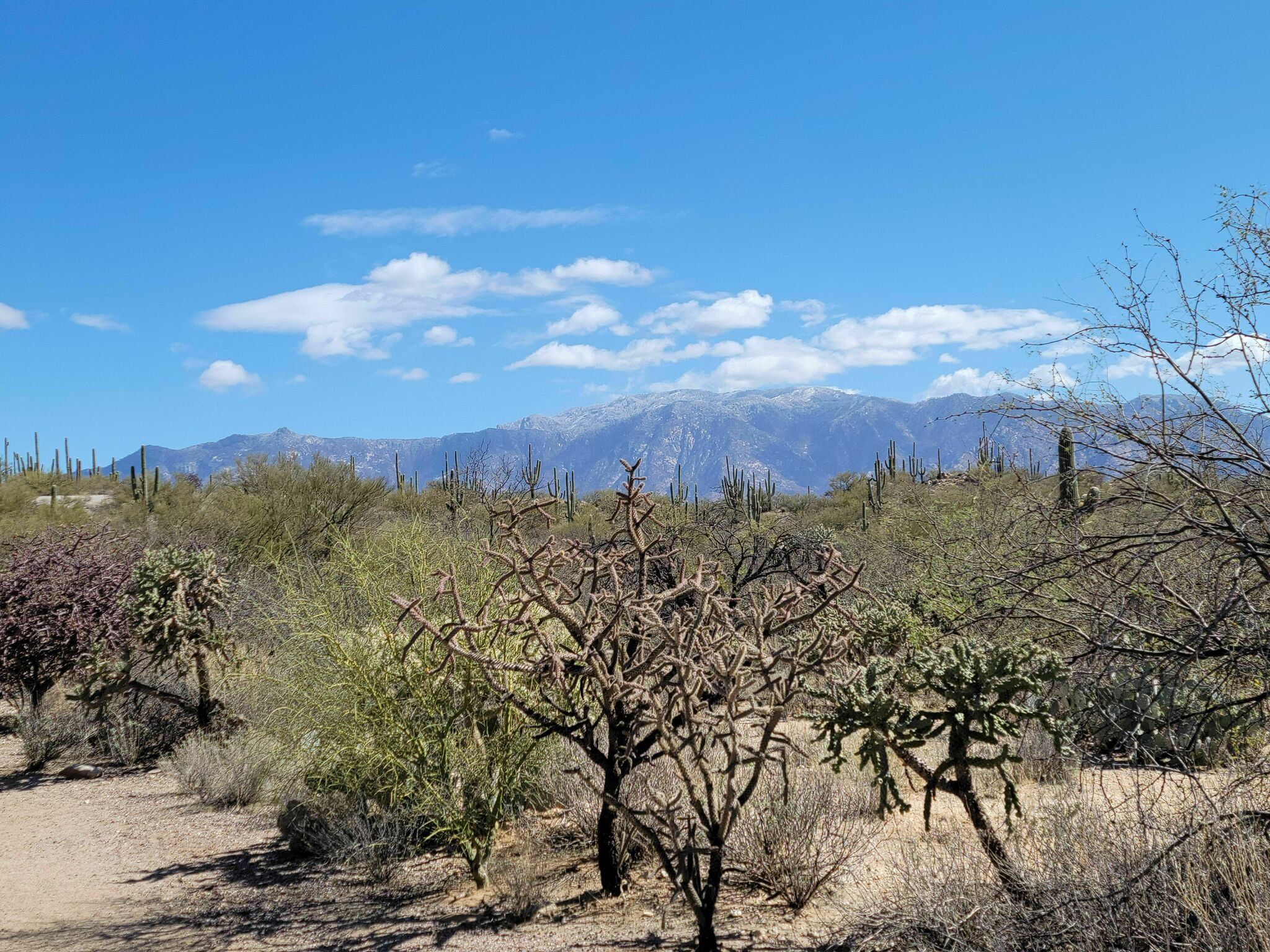 Enjoy Sweeping Mountain Vistas As You Stroll Through The Southern Arizona Wilderness At Honeybee Canyon Park