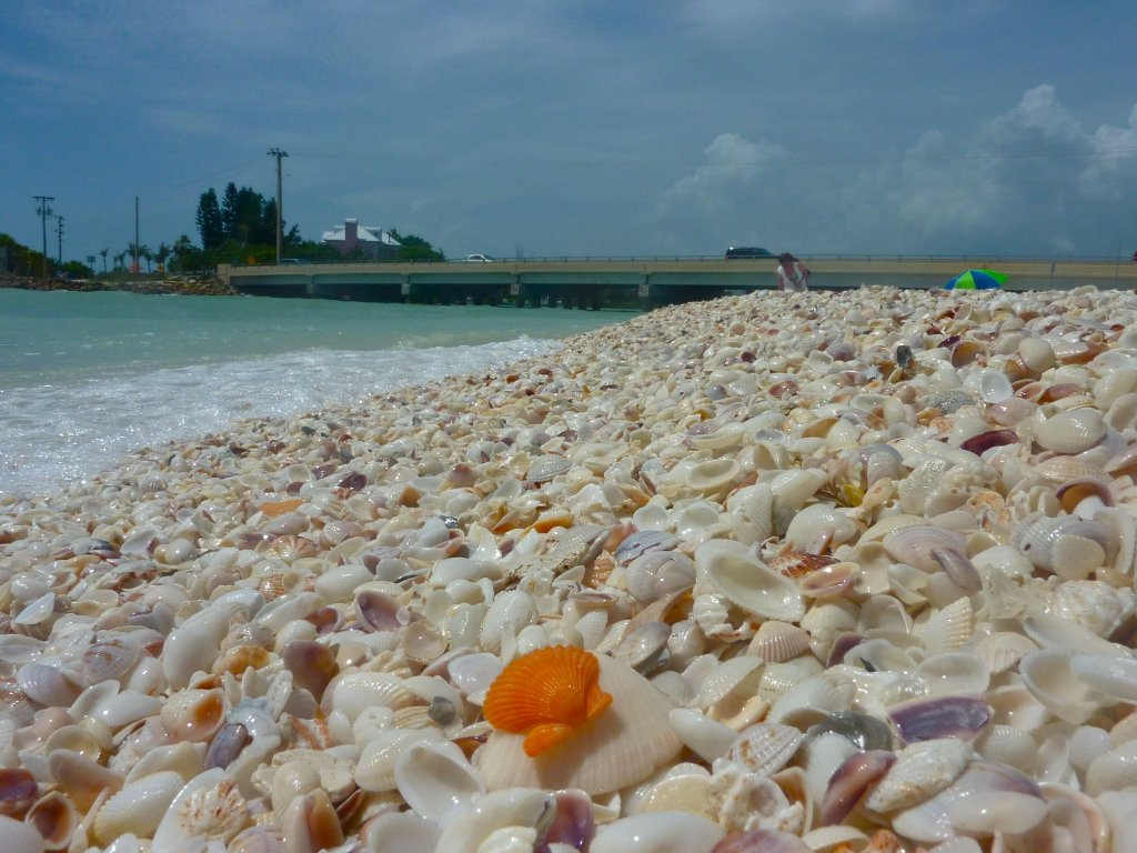 This Hidden Beach Along The Florida Gulf Is The Best Place To Find Seashells