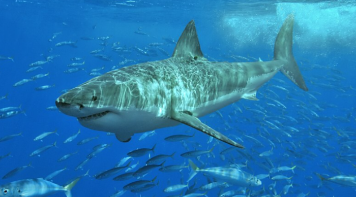 Here Are 7 Kinds Of Sharks You May Find Swimming Off The Jersey Shore